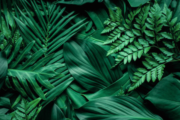 Fotobehang - closeup nature view of green monstera leaf and palms background. Flat lay, dark nature concept, tropical leaf