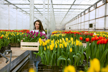 Girl worker with tulips,Beautiful young smiling girl, worker with flowers in greenhouse. Concept work in the greenhouse, flowers. Copy space  stock image