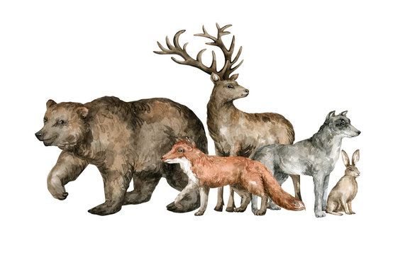 Watercolor forest animals. Brown bear, red fox, deer, wolf, hare. Wild set group of hand drawn animal cliparts for cards, poster, covers, children decoration.