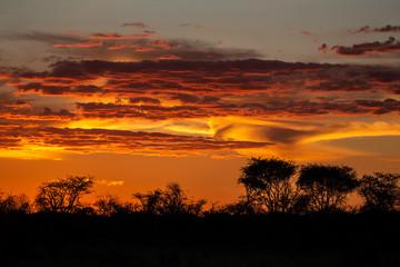 Ciel en feu avec des nuages rouges et orange au couché du soleil avec arbre en silhouette