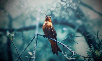 bird on a branch Fototapete