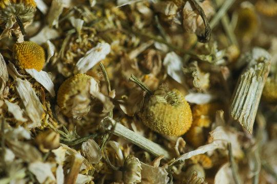 A camomila é uma das mais antigas plantas medicinais usada pelo homem como um remédio natural para aliviar várias doenças.