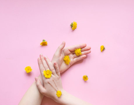 Hands of a woman with yellow flowers  on a pink background. Natural cosmetics product and hand care, moisturizing and wrinkle reduction. Flat Lay and skincare concept.