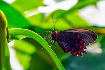 Poster de jardin Papillon Closeup beautiful butterfly in a summer garden