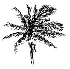 Ink Drawing of a Palm - Naturalistic Vector Design in Black and White