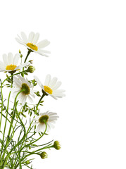 Daisy flowers and grass in a corner floral arrangement