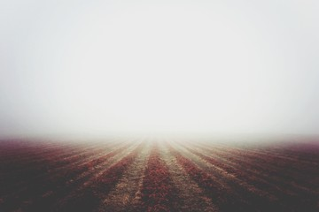 Scenic View Of Agricultural Field Against Clear Sky During Foggy Weather Fototapete