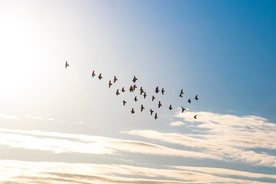 flock of birds in the sky fly to the sun
