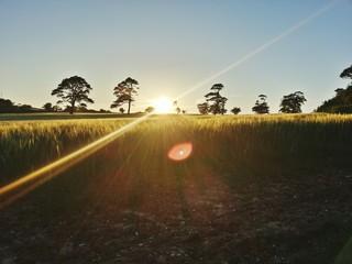 Foto auf AluDibond Rosa dunkel Countryside Landscape At Sunset