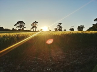 Foto auf Gartenposter Rosa dunkel Countryside Landscape At Sunset