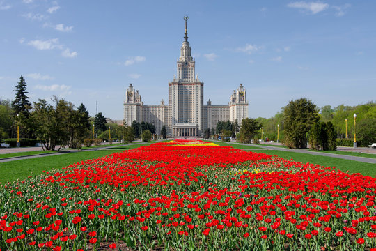 Spring in the Russian capital. Main building of Moscow State University with carpet of tulips. Moscow, Russia.