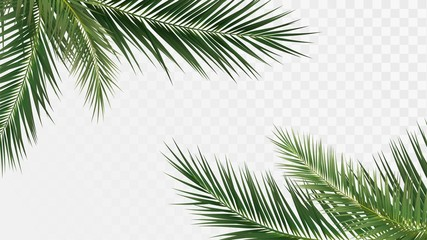 Palm branches in the corners, tropical plants decoration elements Wall mural