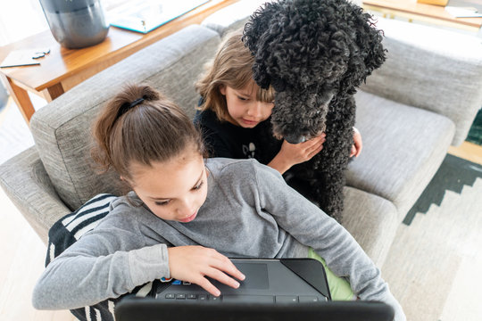 Dog looking over the shoulder of a young girl working on a laptop at home