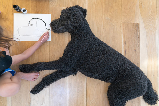 Directly above view of young child drawing a portrait of her black poodle laying down next to her