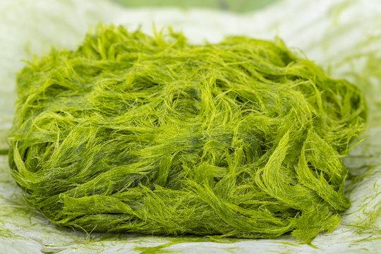 Freshwater green algae scientific name is Spirogyra sp.