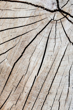 Background: Closeup of wood surface
