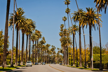 Tuinposter Palm boom Street with palms in Beverly Hills