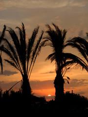 Tunezja zachód słońca palmy wieczór plaża