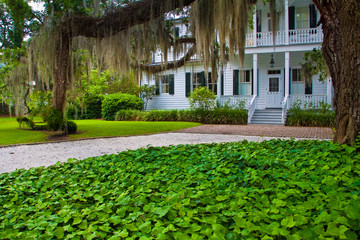 Oak Tree Covered With Spanish Moss and Historic Home Near the Point Historic District, Beaufort, South Carolina, USA