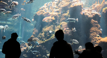 People stand in silhouette in front of an aquarium tank watching marine life swim by Wall mural