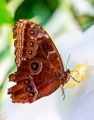 Zelfklevend Fotobehang Vlinder Various butterflies feed in the Butterfly House