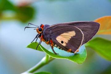 Foto op Textielframe Vlinder Macro Photography of Moth on Twig of Plant.