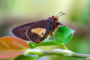 Zelfklevend Fotobehang Vlinder Macro Photography of Moth on Twig of Plant.