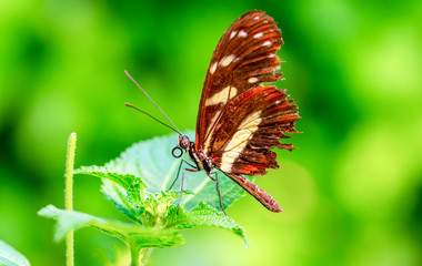 Zelfklevend Fotobehang Vlinder Beautiful heliconius butterfly sitting on flower in a summer garden