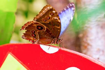 Foto op Textielframe Vlinder Various butterflies feed in the Butterfly House