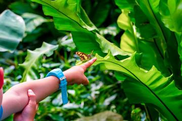 Zelfklevend Fotobehang Vlinder Beautiful Closeup at your fingertips