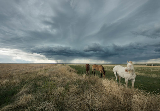 Horses on the Eastern Colorado Plains as an Impending Storm Appraoches