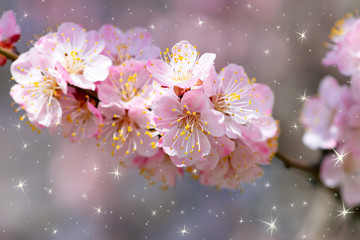 Wall Mural - Spring floral nature background with blooming pink sakura cherry flowers blossom close-up and fairy shining sparkling stars, fantasy floral macro beauty in soft pastel colors, dreamy springtime bloom