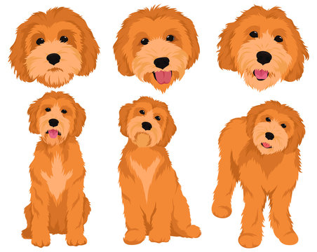 Set of cartoon dog breeds Goldendoodle. Collection of vector portraits of Goldendoodle dogs. Print for clothes. Colorful illustration of a fluffy dog. Tattoo Grodl.