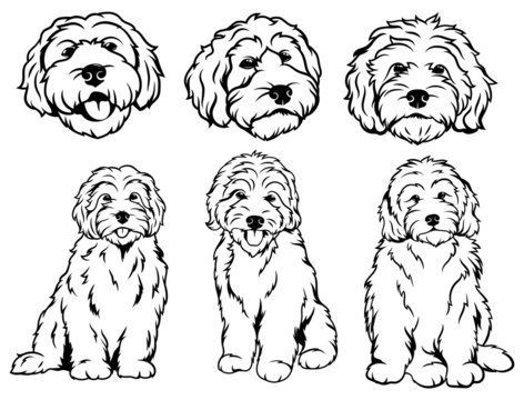 Set of  dog breeds Goldendoodle. Collection of vector portraits of Goldendoodle dogs. Print for clothes. Black and white drawing illustration of a fluffy dog. Tattoo Grodl.