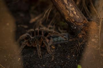 Exhibition of spiders and scorpions in Warsaw. Wystawa pająków i skorpionów