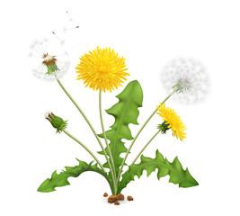 Obraz Realistic Dandelion Flower Composition - fototapety do salonu