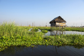 Floating vegetable plantation in Inle lake in Myanmar