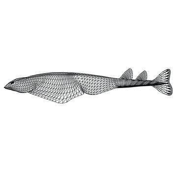 angel shark polygonal lines illustration. Abstract vector angel shark on the white background