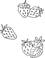 isolated on white background picture strawberries, Stock illustration, vector, doodle,  hand drawing, design element for printing, scrapbooking, postcard