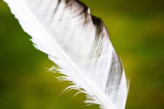 Close-up Of White Feather