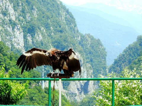 View Of Vulture Perching On Metal Fence