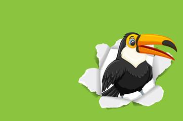 Background template design with wild toucan bird Fototapete