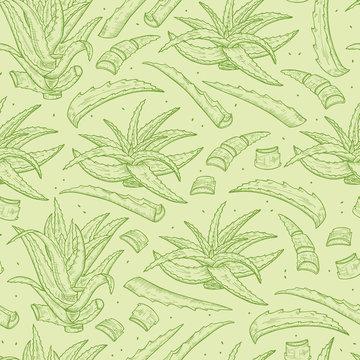 Hand drawn Aloe Vera plant leaves Seamless pattern. Medicinal plants Green background. Vector illustration