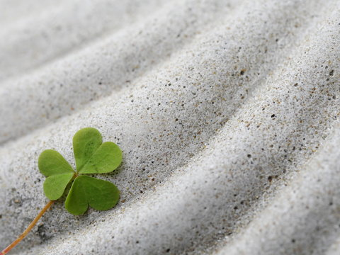 Close-up Of Clover Leaf On Stone