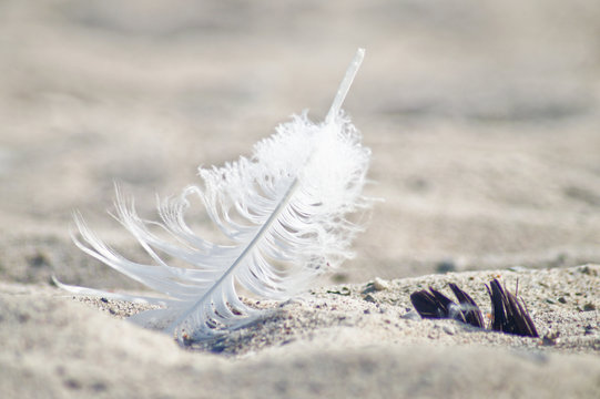 Close-up Of Fallen White Feather On Sand