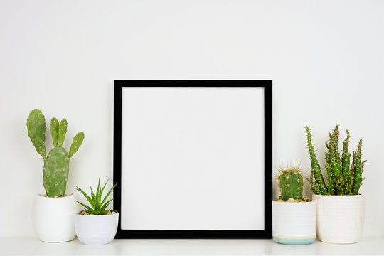 Mock up black square frame with potted cacti and succulent plants. White shelf against a white wall. Copy space.