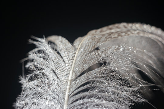 Upper part of feather covered with water on black background