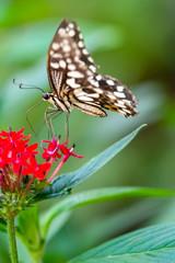 Foto op Textielframe Vlinder Closeup beautiful butterfly in a summer garden