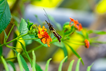 Photo sur cadre textile Papillon Beautiful heliconius butterfly sitting on flower in a summer garden