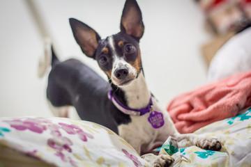 Little Dog Fotobehang